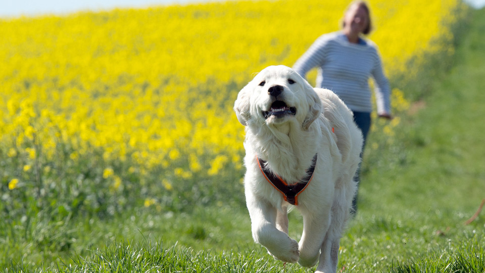 Sommeraktion Wdr 4 Und Quot Tiere Suchen Ein Zuhause Quot Suchen Quot Die Sch 246 Nste Hunderunde
